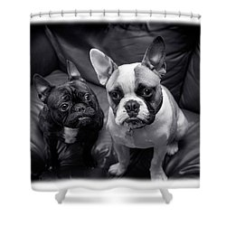 Bulldog Buddies Shower Curtain