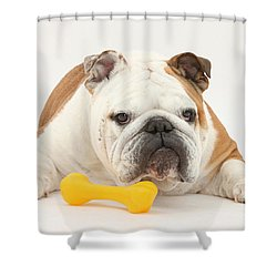 Bulldog With Plastic Chew Toy Shower Curtain by Mark Taylor