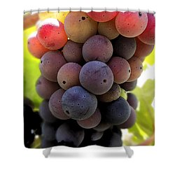 Bunch Of Ripening Grapes Shower Curtain by Anne Mott