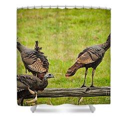 Bunch Of Turkeys Shower Curtain by Cheryl Baxter