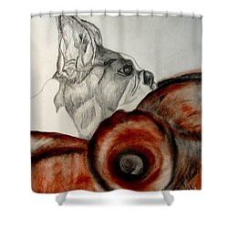 Shower Curtain featuring the drawing Bundled In Blankets by Maria Urso
