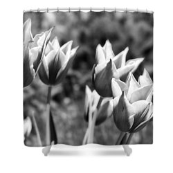 Burgundy Yellow Tulips In Black And White Shower Curtain by James BO  Insogna