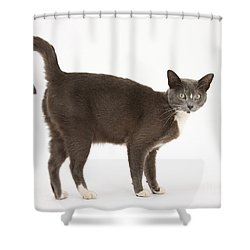 Burmese-cross Cat Shower Curtain by Mark Taylor