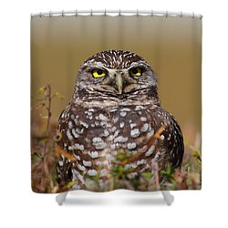 Burrowing Owl II Shower Curtain by Bruce J Robinson
