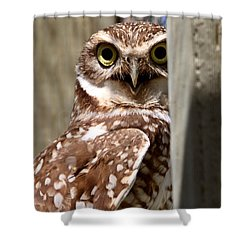 Burrowing Owl On Enclosed Window Seal Shower Curtain by Mark Duffy