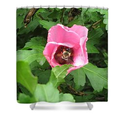 Busy B  In Hibiscus Shower Curtain by Sonali Gangane