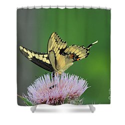Shower Curtain featuring the photograph Butterflies Are Free by Kathy  White