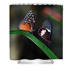 Butterflies Shower Curtain by Skip Willits