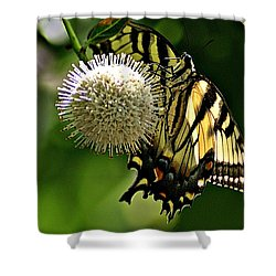 Butterfly 3 Shower Curtain by Joe Faherty