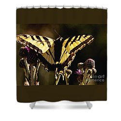 Butterfly And Thistle II Shower Curtain