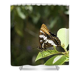 Shower Curtain featuring the photograph Butterfly At Rest by Betty Depee