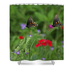Butterfly Chase Shower Curtain by Susan Rovira