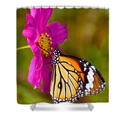 Butterfly II Shower Curtain by Fotosas Photography
