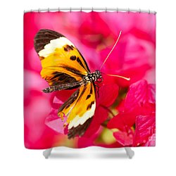 Shower Curtain featuring the photograph Butterfly by Les Palenik