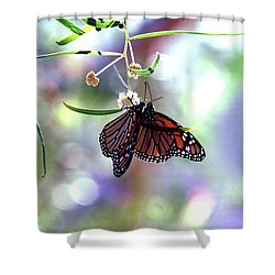 Shower Curtain featuring the photograph Butterfly Meet-up by Tam Ryan