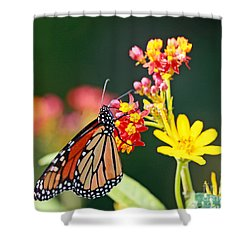 Butterfly Monarch On Lantana Flower Shower Curtain