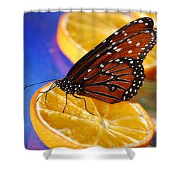 Shower Curtain featuring the photograph Butterfly Nectar by Tam Ryan