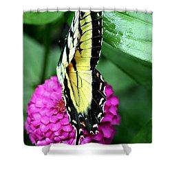Butterfly On Pink Shower Curtain by Susan Leggett