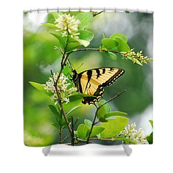 Shower Curtain featuring the photograph Butterfly Tiger Swallow by Peggy Franz