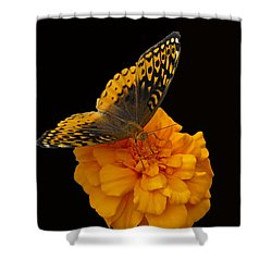 Butterfly Visitor Shower Curtain by Cindy Manero