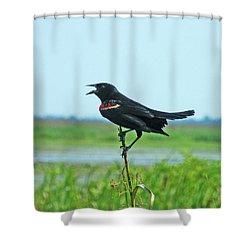 Bye Bye Blackbird Shower Curtain by Lizi Beard-Ward