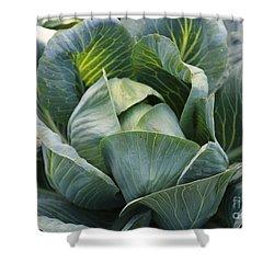 Cabbage In The Vegetable Garden Shower Curtain by Carol Groenen