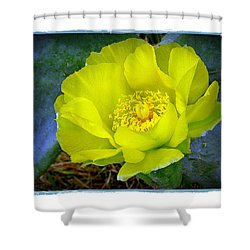 Shower Curtain featuring the photograph Cactus Flower by Judi Bagwell