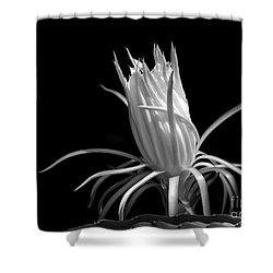 Cactus Flower Shower Curtain by Sabrina L Ryan