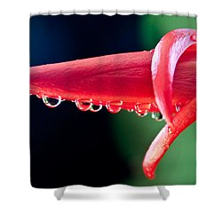 Cactus Orchid Bud Shower Curtain by Dana Kern