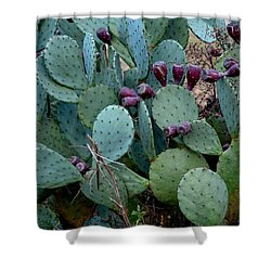 Cactus Plants Shower Curtain by Maria Urso