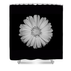 Shower Curtain featuring the photograph Calendula Flower - Black And White by Laura Melis