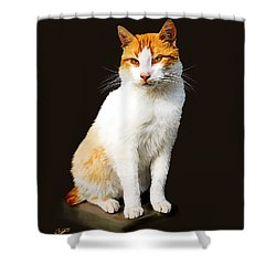 Calico Shower Curtain by Tom Schmidt