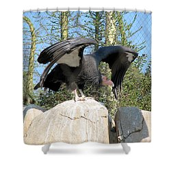 Shower Curtain featuring the photograph California Condor by Carla Parris