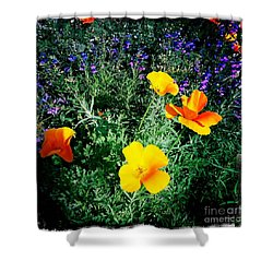 Shower Curtain featuring the photograph California Poppy by Nina Prommer
