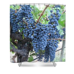 Calistoga Bloom Shower Curtain by Jean Macaluso