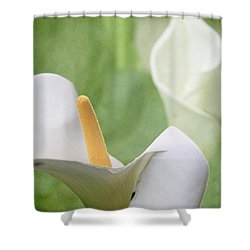 Calla Lilies Shower Curtain by Alyce Taylor