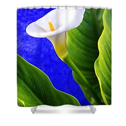 Calla Over Blue Shower Curtain by Carlos Caetano