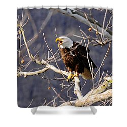 Shower Curtain featuring the photograph Calling For His Mate by Randall Branham