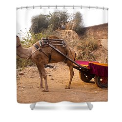 Camel Yoked To A Decorated Cart Meant For Carrying Passengers In India Shower Curtain by Ashish Agarwal