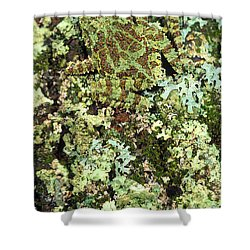 Camouflaged Vietnamese Mossy Tree Frog Shower Curtain by John Pitcher