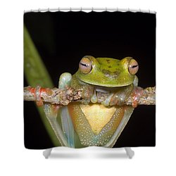 Canal Zone Tree Frog Shower Curtain by Dante Fenolio