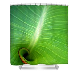 Canalilly Ear Shower Curtain
