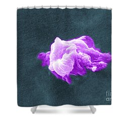 Cancer Cell Death, Sem 6 Of 6 Shower Curtain by Science Source