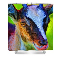 Candy Goat Shower Curtain by Mariola Bitner