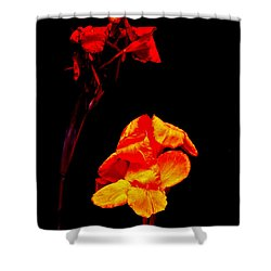 Canna Lilies On Black Shower Curtain by Mother Nature