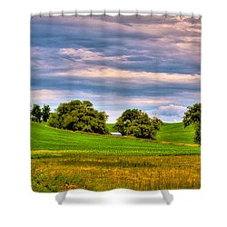 Canola Among The Wheat II Shower Curtain by David Patterson