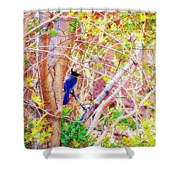 Canyon Jay  Shower Curtain by Clarice  Lakota