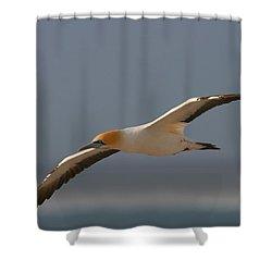 Cape Gannet In Flight Shower Curtain by Bruce J Robinson
