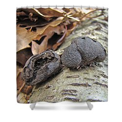 Carbon Balls Fungi - Daldinia Concentrica Shower Curtain by Mother Nature