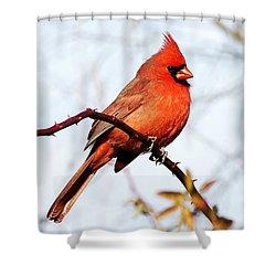 Cardinal 1 Shower Curtain by Joe Faherty